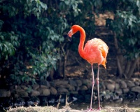 flamingi! flamingi wszędzie!